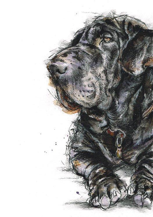 Basset hound x Shar pei
