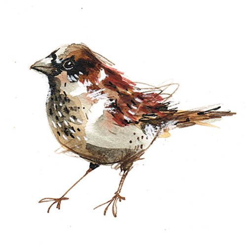 House Sparrow Laura McKendry