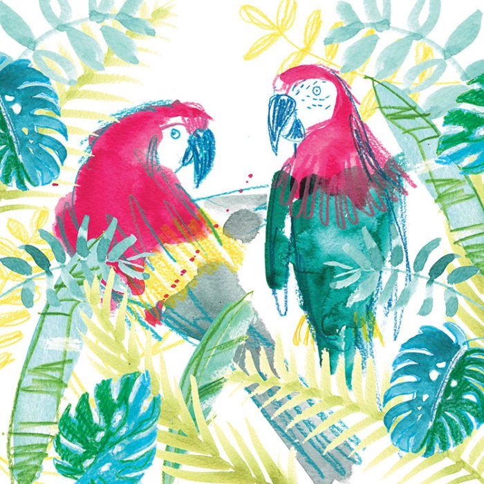 parrots troipcal laura mckendry bird illustration