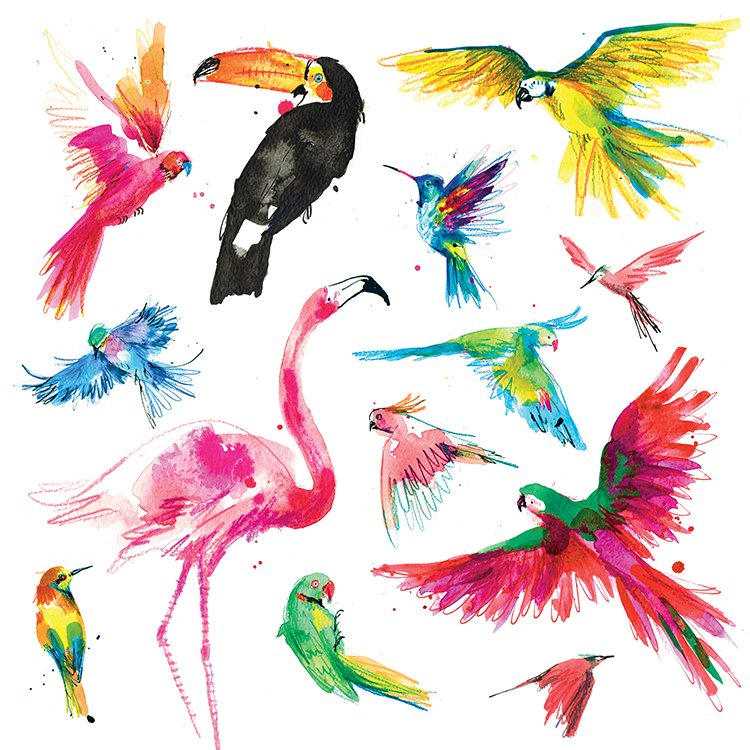 tropical birds laura mckendry illustration