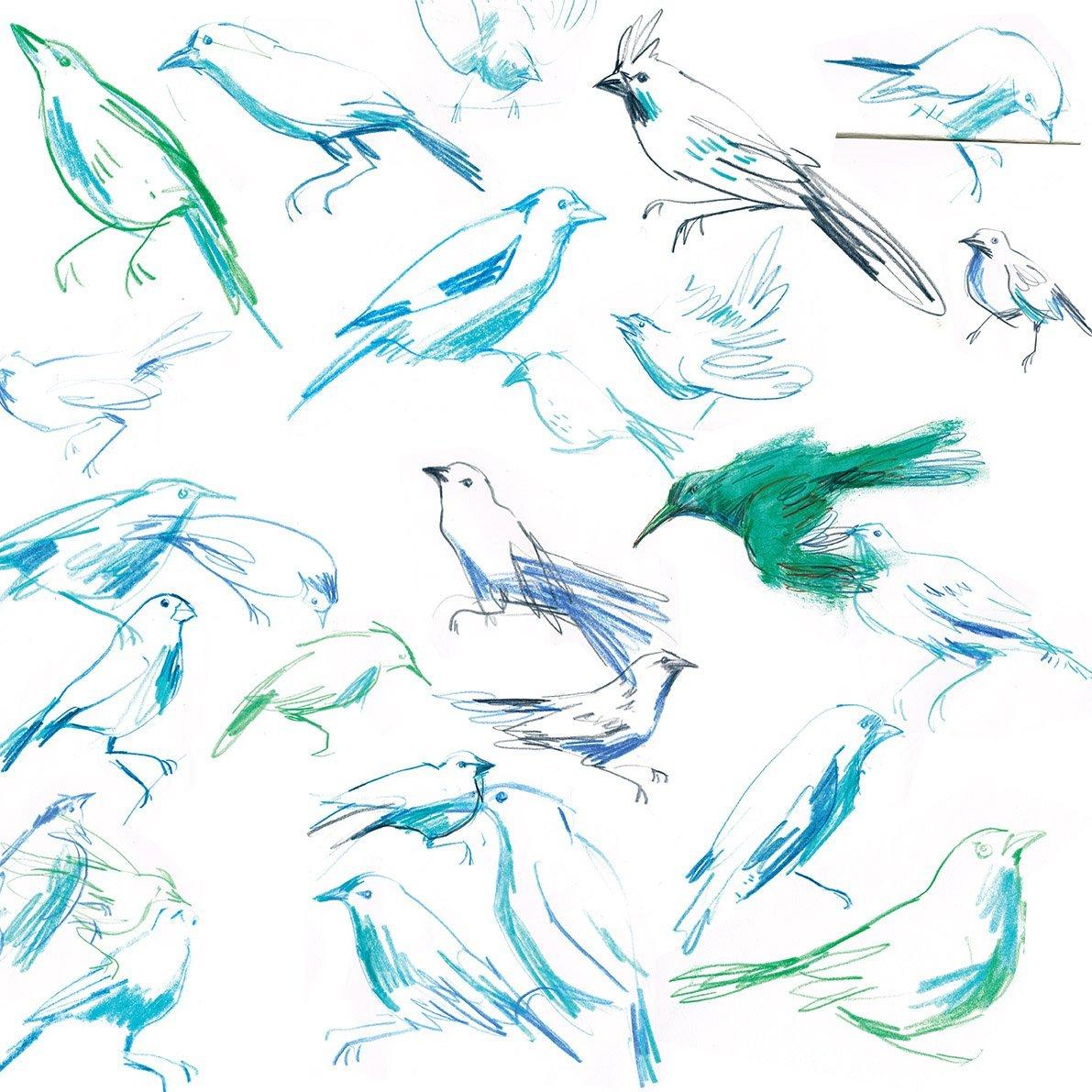 horniman birds laura mckendry