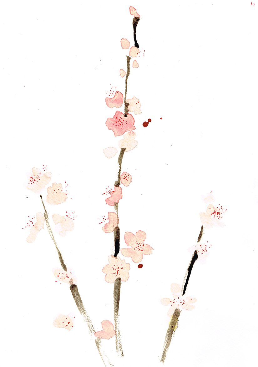 peach blossom twig laura mckendry