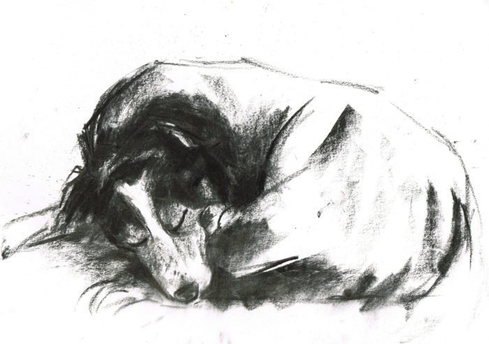 border collie asleep laura mckendry