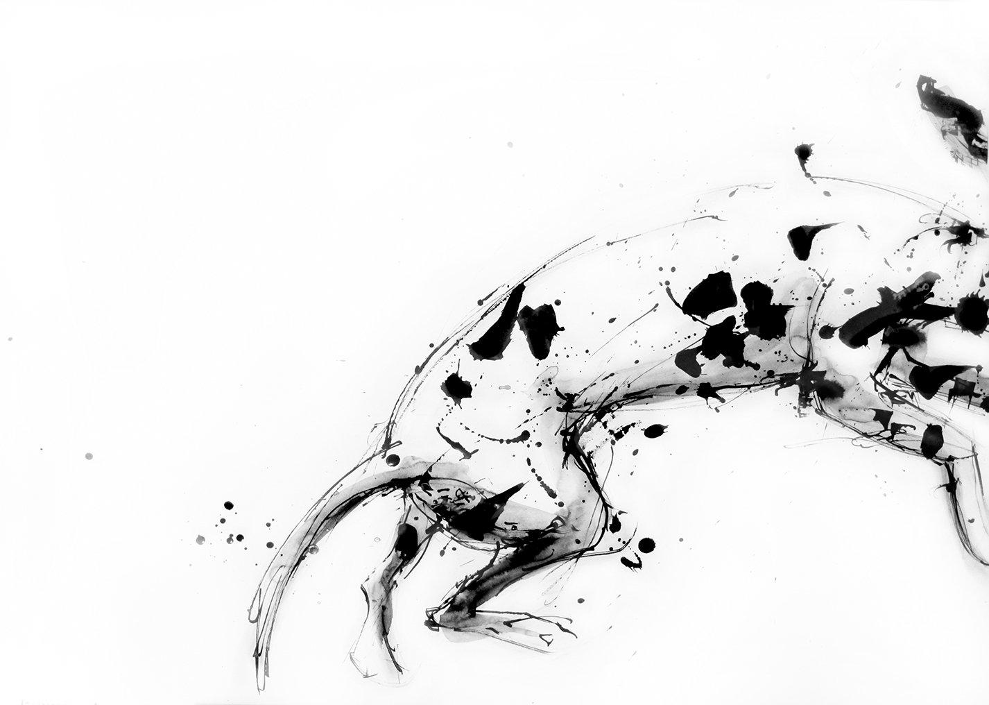 dalmatian leaping