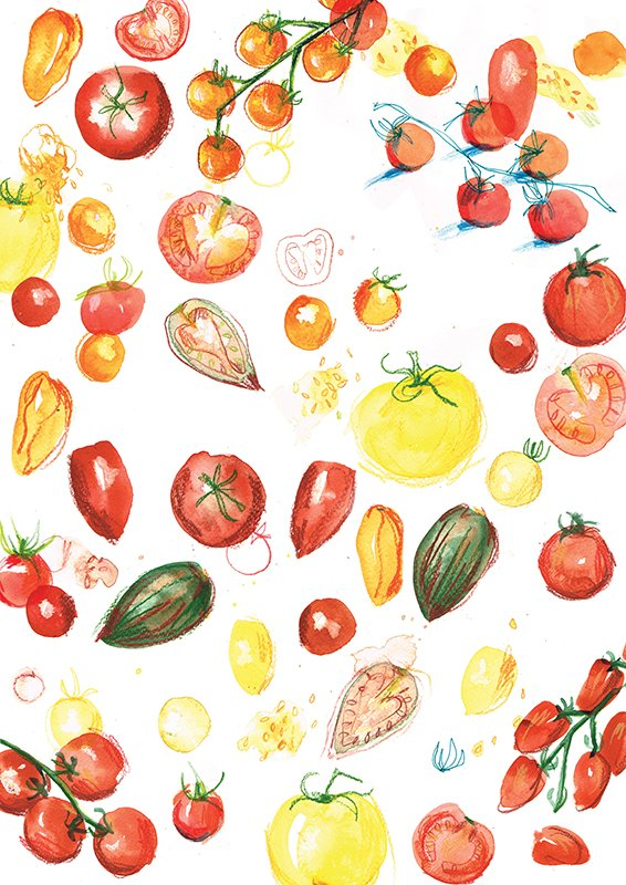 Tomato medley laura mckendry food illustration
