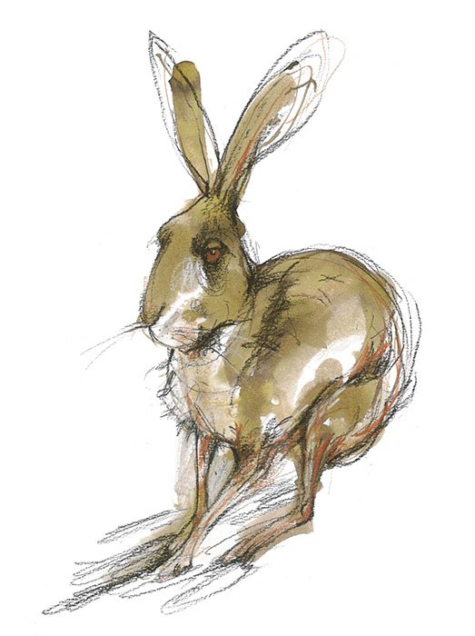 Hare laura mckendry animal illustrator