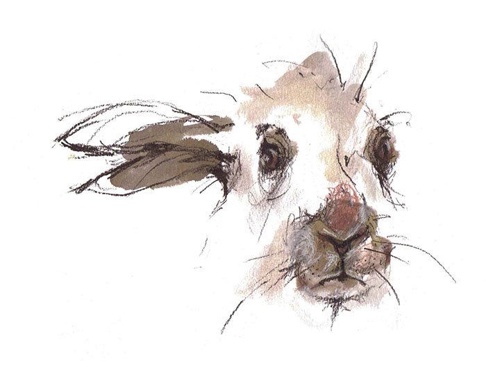 hare face laura mckendry animal illustrator