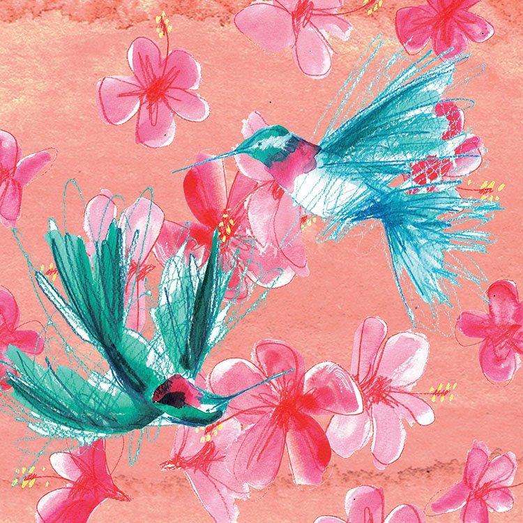 hummingbirds laura mckendry