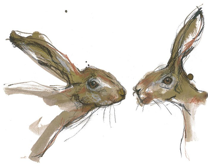 Two hares laura mckendry animal illustrator