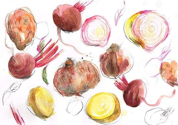 beetroot types laura mckendry food illustrator