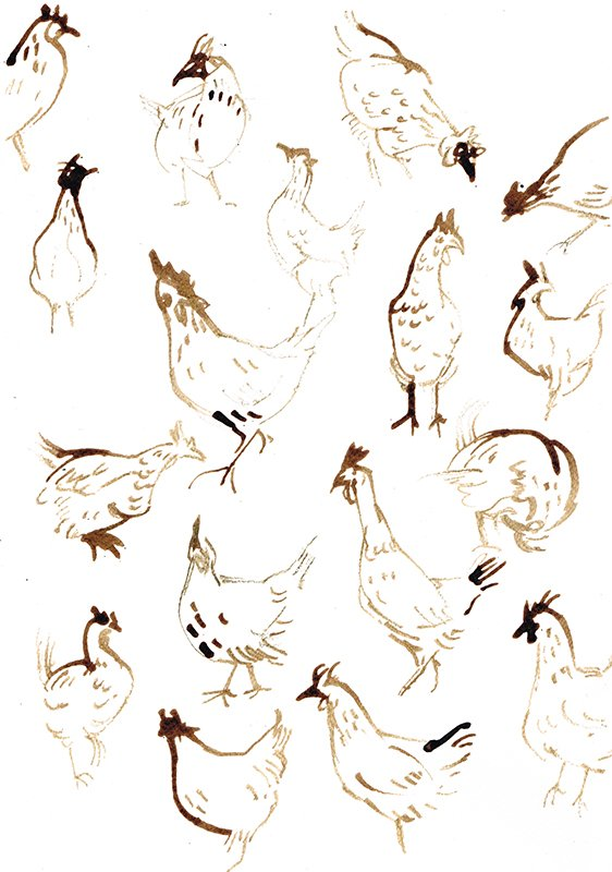 chickens laura mckendry bird illustration