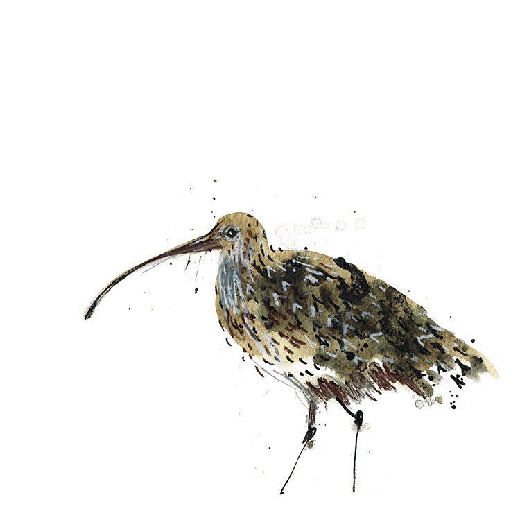 curlew laura mckendry coastal