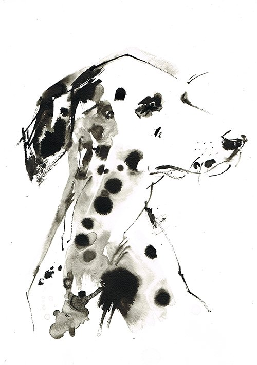 dalmatian ink laura mckendry dog illustration
