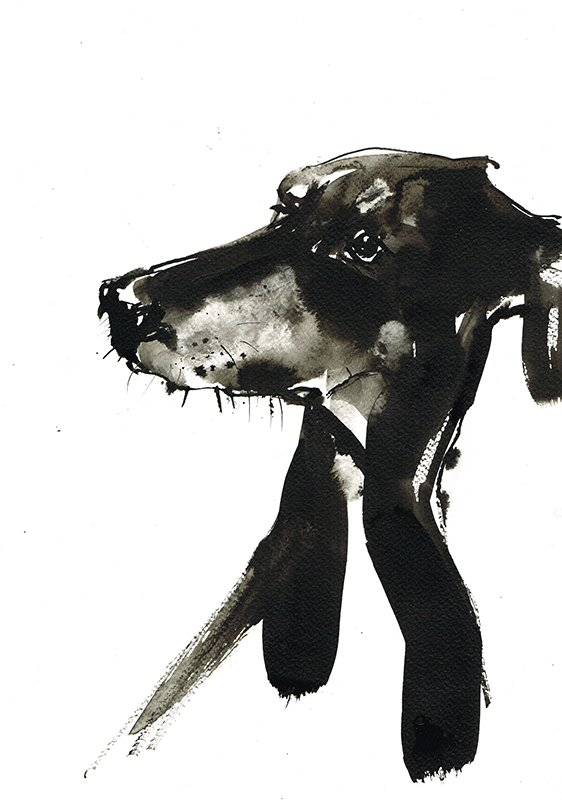 doberman laura mckendry dog illustration