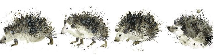 hedgehogs laura mckendry