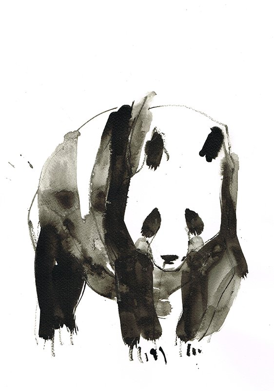 panda 3 laura mckendry ink animal illustration