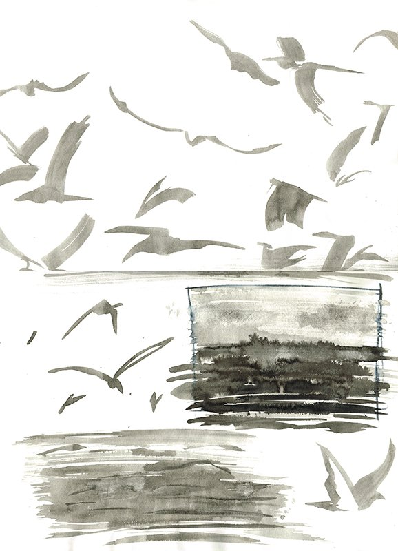 ink drawing shearwater birds laura mckendry