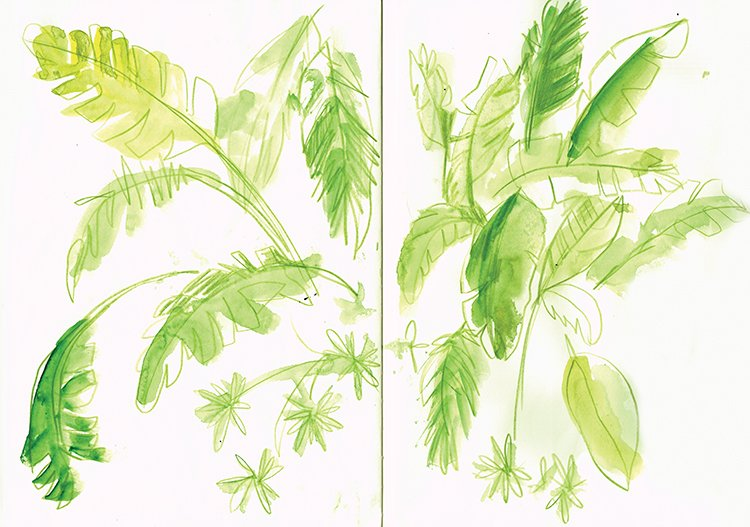 tropical plants 1 laura mckendry cadiz