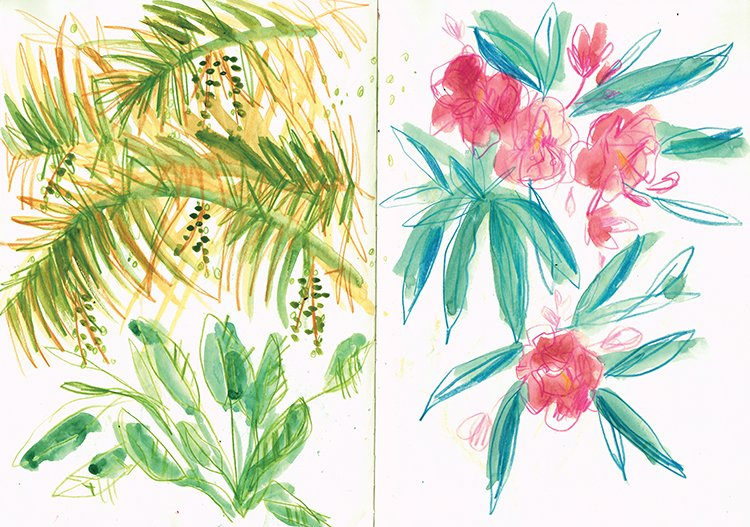 tropical plants laura mckendry spain illustration