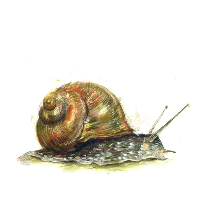snail laura mckendry